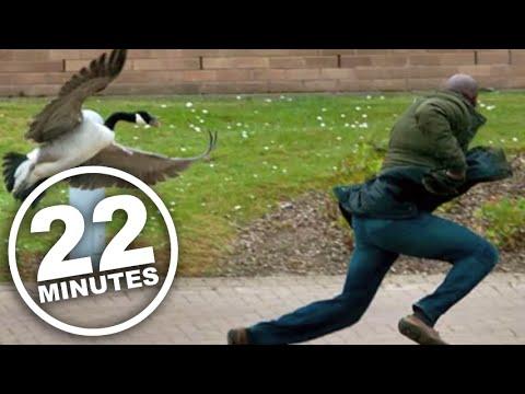 22 Minutes: Canada Goose Attack Ad