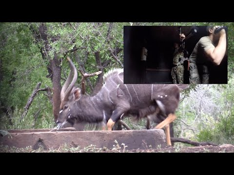 Bowhunting A Very Unique Nyala W: Perfect Shot   Bowhunting Africa