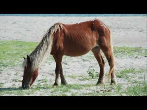 Wild Horse & Shelling Safari | Beaufort NC, Emerald Isle NC, Atlantic Beach NC