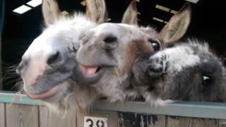 The Donkey Sanctuary - The Life of Pie