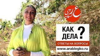 Как сказать по-арабски Как дела? Ответы на вопросы. Живой арабский с Еленой Клевцовой