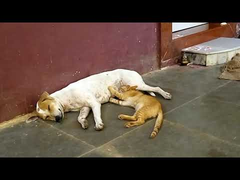 Dog and Cat's cute friendship