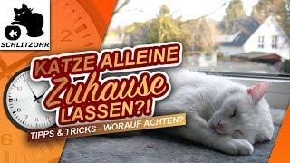 🔥Katze alleine lassen | ab wann & wie lange Katzen alleine Zuhause lassen? | Tipps & Tricks