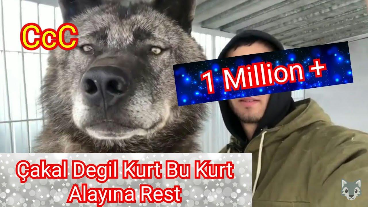 BU KURDU YIKABILEN KANGALA 50.000 TL ÖDÜL