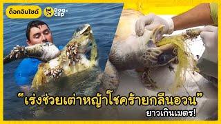 เร่งช่วยเต่าหญ้าสัตว์เสี่ยงสูญพันธุ์ใกล้ตายกลางทะเล หลังกลืนอวนหาปลายาวเกินเมตร | Dog's Clip