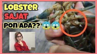 Lobster Air Tawar : Cara Kenal Jantina Lobster Air Tawar 🤔