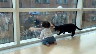 愛猫ギネスと窓拭きおじさん⑥③