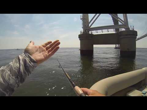 Topwater Madness At The Chesapeake Bay Bridge