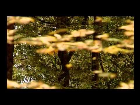 ZABOLA FILM VARIO MEDIA WWW.MIKEWEB.EU ZABOLA KÖZSÉG BEMUTATÓ FILMJE