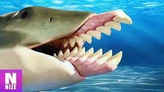 Schreckliche Monster aus der Urzeit, die zum Glück ausgestorben sind!