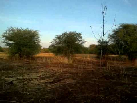 Sudan, driving and Dinder national park looking for Lions