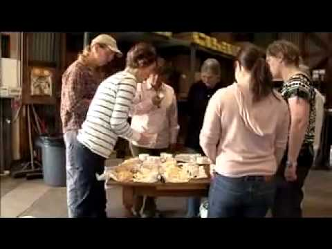 Organic Dairy Farming in Marin County - SF Bay Area