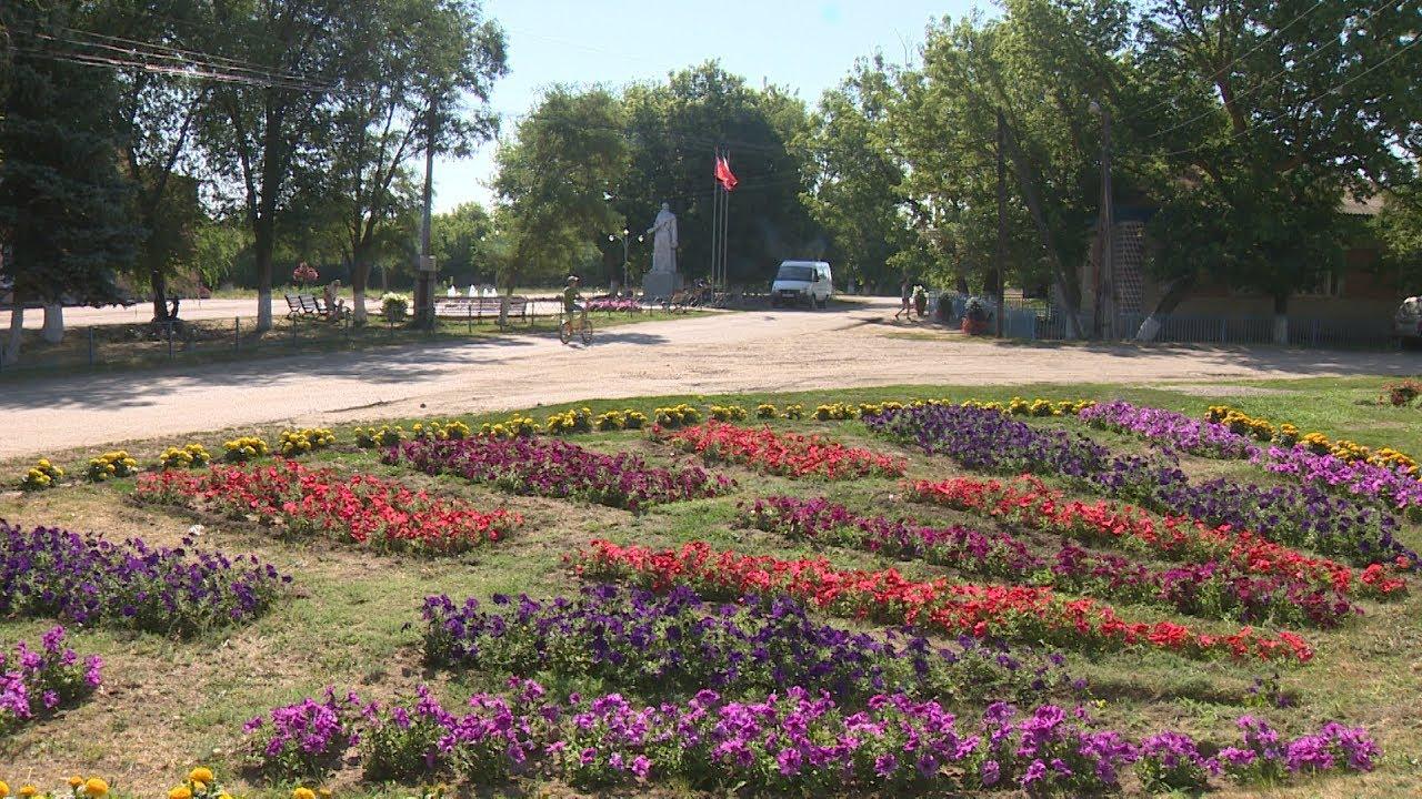 ильмень волгоградская область фото небольшом садовом товариществе