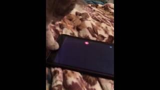 Кот играет в планшет. Игры для кота. Приколы с котом. Лазер и кот. Смешно