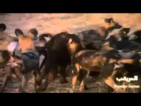 Thế Giới Động Vật Hoang Dã Thiết Minh Tiếng Việt - Cuộc Chiến Sinh Tồn ► Phần  2