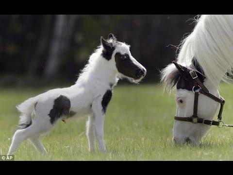 So Cute Happy Baby Horse Youtube