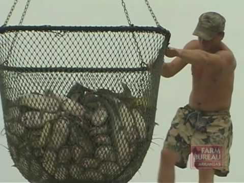 Arkansas Farm Bureau - Catfish Farming Challenges