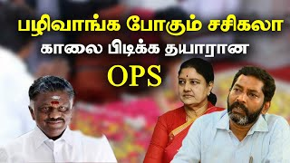 sasikala release - what will happen to OPS and EPS when sasikala released