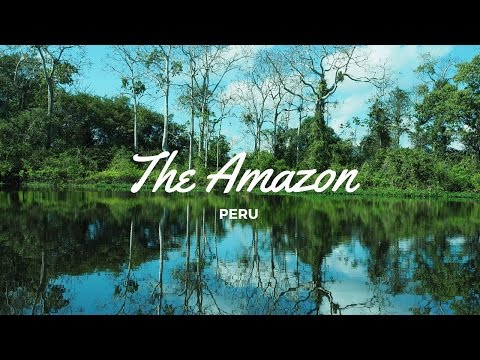 The Amazon Jungle!