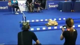 Balapan Kelinci vs Kura-kura, siapa menang ?
