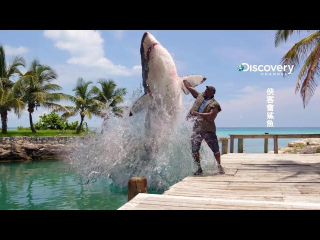 俠客會鯊魚