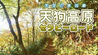 秋の散策にいかがですか。天狗高原セラピーロード