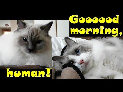 Good morning, Ragdolls!
