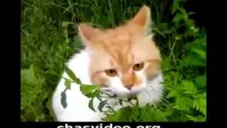 Кот и валерьянка)))
