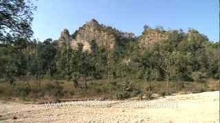 Gujjar dera in Rajaji National Park