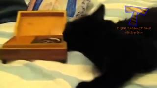 Some cats and dogs really love music Funny and cute animal compilation