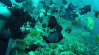 Planet Dive (NAUI) @ the Cathedral | Anilao, Batangas Philippi…