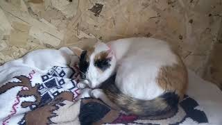 Плюсы и минусы содержания кошек.