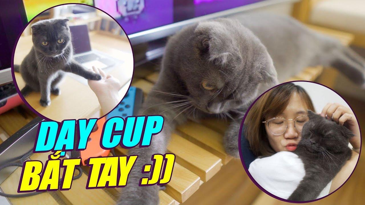 THỬ THÁCH DẠY CUP BẮT TAY TRONG MỘT NGÀY VÀ CÁI KẾT 😂😂😂 - CUP THE CAT