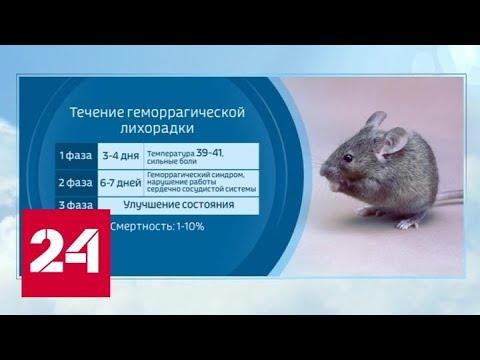 У COVID-19 появился подражатель? Крысиный хантавирус начал убивать в Китае - Россия 24