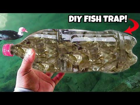 DIY PLASTIC Bottle FISH TRAP!