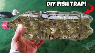 diy-plastic-bottle-fish-trap