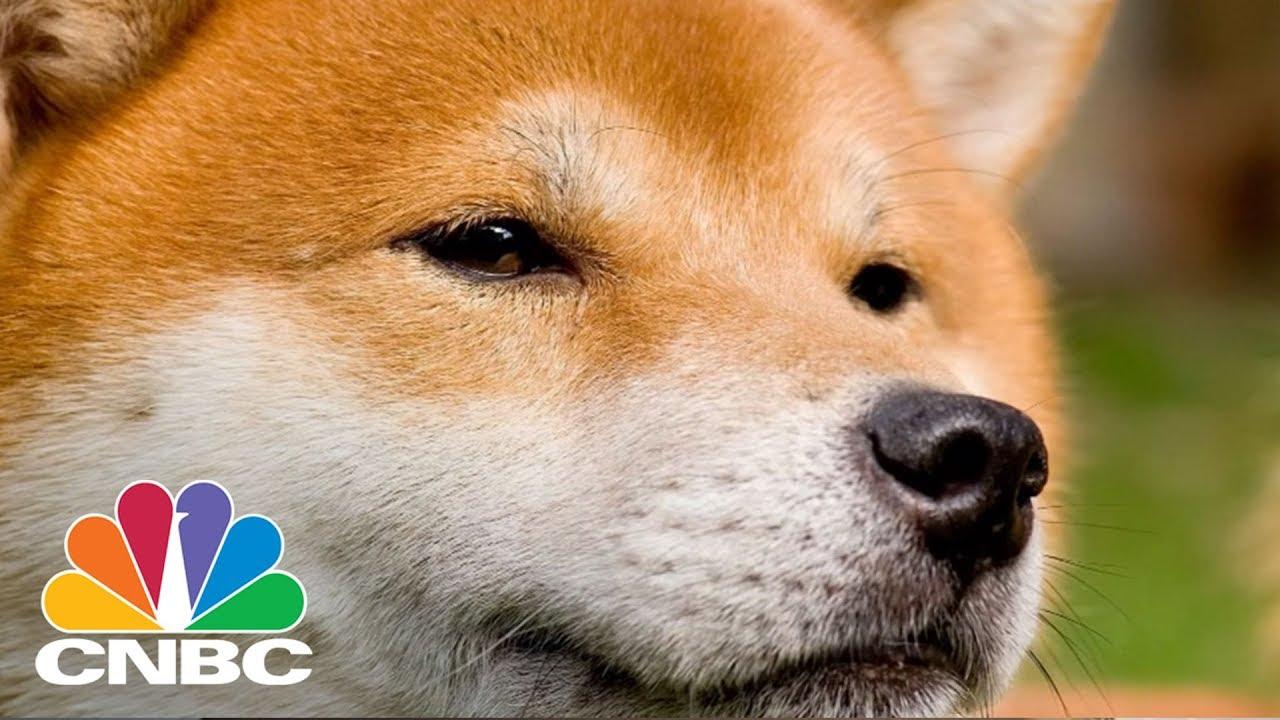 Dogecoin wallet apkpure