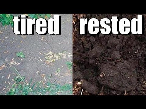 Does Garden Soil Need to Rest?