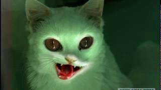 Страшные истории-Синий кот
