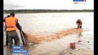 видео Новости   — FishNet.ru