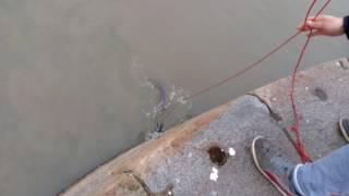 рыбалка.ловим Угря