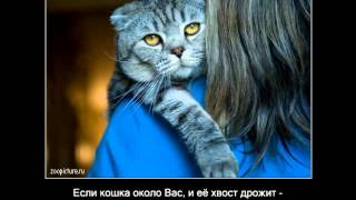 Интересные факты про котов