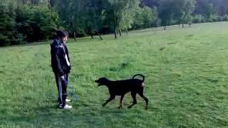 Dobermann My Dog 1 Cleopatra
