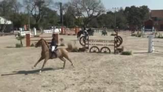 Конкурят без выездки лошади