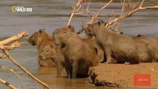 Животный мир Африки. Часть 1.