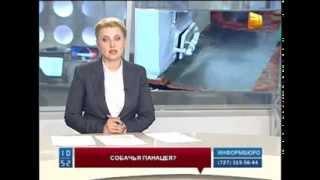 Казахстанцев предупредили об опасности лечения собачьим жиром.
