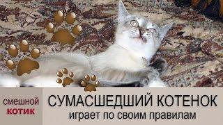 🐾 Смешные котики иногда становятся сумасшедшими…