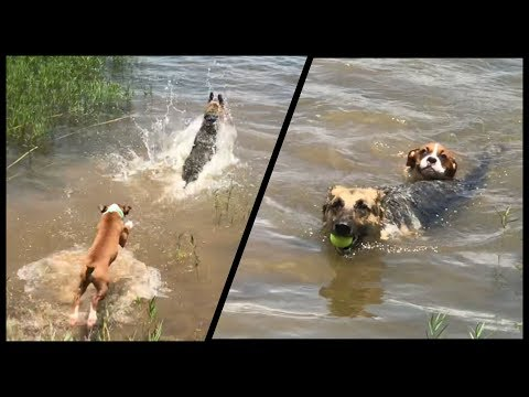 Swimming with the BIG DOG!!