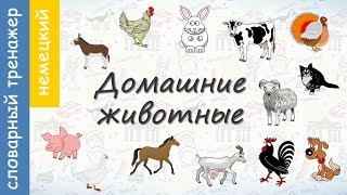 Домашние животные на немецком. ВИДЕОТРЕНАЖЕР