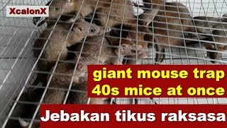 Giant Mouse Trap jebakan tikus super besar